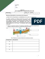 8°_Guía 1_membrana plasmática
