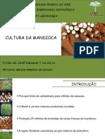 Cultura da Mandioca.pptx