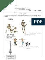 Taller De Ciencias Naturales El Esqueleto.docx