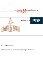 Bases Anatómicas y Fisiológicas (1)