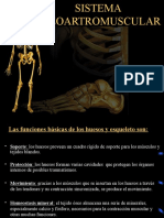Primero Sistem Osteo