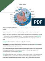 CÉLULA Y TEJIDOS.docx