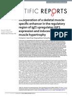 Incorporation of a Skeletal Muscle-specific Enhancer in the Regulatory Region of Igf1 Upregulates IGF1 Expression and Induces Skeletal Muscle Hypertrophy