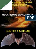 Mecanismos sensoriales.pdf