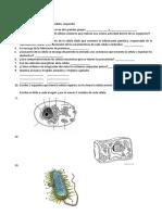 Examen ciencias naturales recuperacion.docx