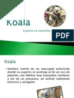 koala-110627190341-phpapp02
