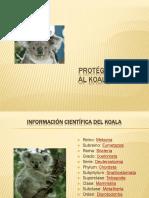 koala-110827160232-phpapp02