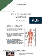 Fisiologia de Los Músculos