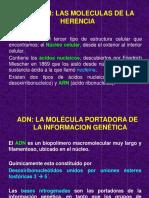 ADN Y ARN 2.pdf
