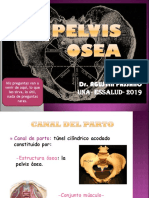 PELVIS OSEA 2010.ppt
