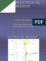 Anatomi Extremitas Inferior