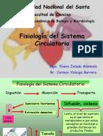Circulatorio i