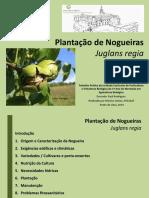 Plantação Nogueiras