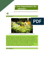 Por Qué Son Importantes Las Plantas