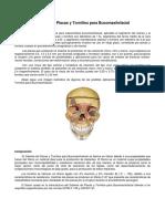 Tecnica Quirurgica Maxilofacial