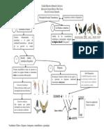 Escuelas taxonómicas