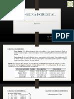 INTRODUCCIÓN - MENSURA FORESTAL - EJERCICIOS