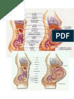 Abdomen de Una Embarazada