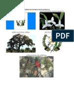 Simbolos Patrios de Centroamerica (Solo Imagenes)