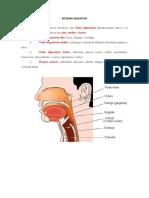 25. Sistema Digestivo Com Prova