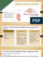 Glomerular y Tubular