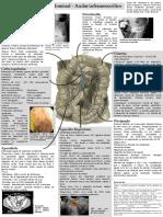 Dor abdominal - andar inframesocólico