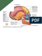 Bentuk Tulang biologi.docx