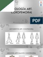 Clase Miologia Coxofemoral