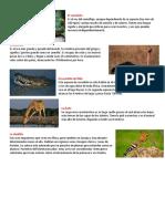 Animales de Sudrafica