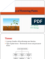 Chapter 6 - Anatomy of Flowering Plants