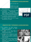 i Arquitectura y Topografia Alveolodentaria