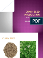 Cumin Seed Production