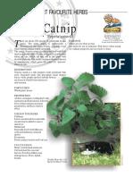 Catnip Medicinal