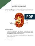 Medžiagų Šalinimas Ir Osmoreaguliacija