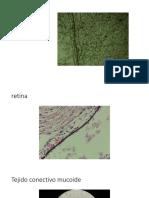 tejido epitelial y conectivo.pptx