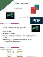 5 DNA cromosomas y genoma II.pdf