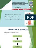 TAREA 2 y 3 NUTRICIÓN.pptx