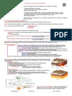 TEMA-1-RESUMO-1.pdf