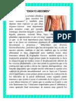 Ensayo Anatomia Abdomen