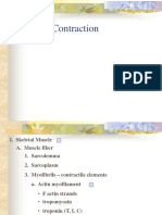 Muscle Contraction
