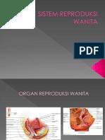 Histologi Sistem Reproduksi