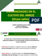 $ENFERMEDADES EN EL CULTIVO DE ARROZ$$-1.pdf