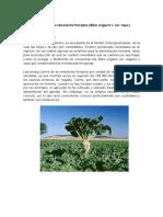 154427240 El Cultivo de La Remolacha Forrajera