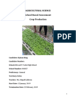 kyjuan king Crop Production Cilantro SBA  2019 (1).docx