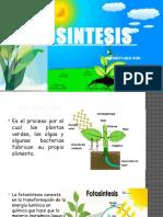 Fotosintesis - Diapositiva Expo