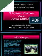 Búfalo Manejo y Razas