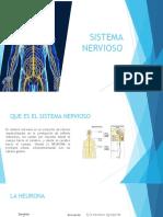 Diapositiva Del Sistema Nervioso