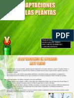 PLANTAS.pptx