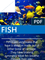 FISHES.pptx