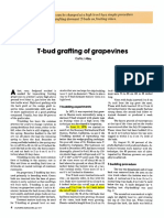 T Bud Grafting
